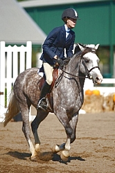 Wintermist Call the Shots - Section B Welsh Pony